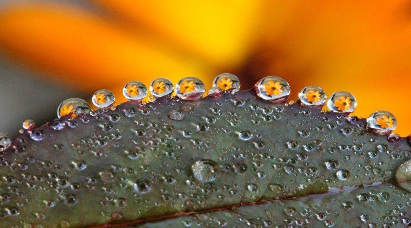 dew-drop-1752801_1920